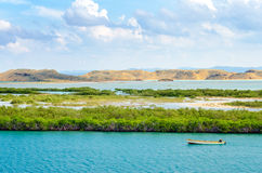 Mangroves and Boat Royalty Free Stock Images