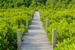 Mangroves bridge Royalty Free Stock Image