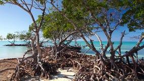 Mangroves at caribbean seashore,Cayo Jutias beach, Cuba stock footage