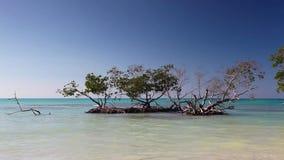 Mangroves at caribbean seashore, Cayo Jutias beach stock video