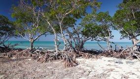Mangroves at caribbean seashore, Cayo Jutias beach stock video footage