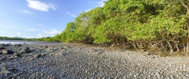 Mangroves, Costa Rica Stock Photography