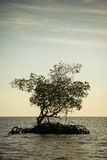 Mangroves in Florida Royalty Free Stock Photo
