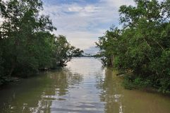 Mangroves forest. Leading to sea Royalty Free Stock Image