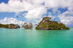 Mangroves and Frigatebirds Royalty Free Stock Images
