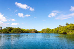Mangroves in the Galapagos Royalty Free Stock Images