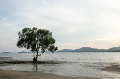 Mangroves growing in shallow lagoon Stock Images
