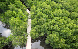 Mangroves High Royalty Free Stock Photos