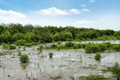 Mangroves in Kukup Royalty Free Stock Images