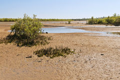 Mangroves and low tide. Madagascar Royalty Free Stock Image