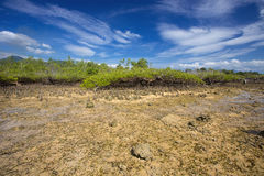 Mangroves at low tide, near Manado, Sulawesi,Indonesia Stock Photo