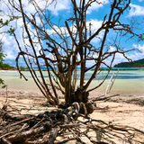 Mangroves at low tide Stock Photo