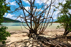 Mangroves at low tide Royalty Free Stock Image