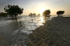 Mangroves, Malaysia. The tide making its way in towards a mangrove forest by the coast in the late afternoon stock photography