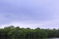 Mangroves with overcast Royalty Free Stock Photo