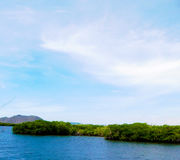 Mangroves Stock Photography