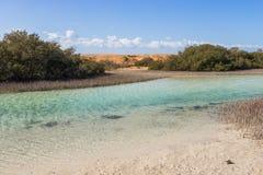 Mangroves in Ras Mohamed National Park Royalty Free Stock Image