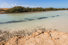Mangroves in Ras Mohamed National Park Stock Photos
