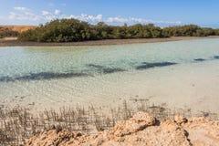 Mangroves in Ras Mohamed National Park Stock Images