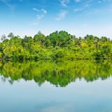 Mangroves and  river Stock Photo