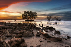 Mangroves in the sea with dramatic sunrise sky Stock Photography