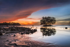 Mangroves in the sea with dramatic sunrise sky Royalty Free Stock Images
