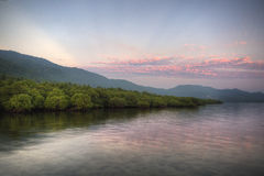 Mangroves in the Sea Royalty Free Stock Images