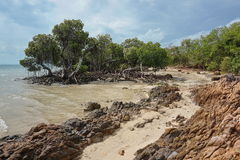 Mangroves on seashore sand and rocks New Caledonia Stock Photography