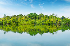 Mangroves and  sky Stock Photo