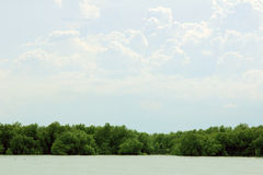 Mangroves with sky Royalty Free Stock Photo