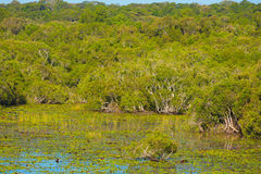 Mangroves in southern Vietnam Stock Photo