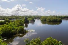 Mangroves in Sri lanka Royalty Free Stock Photos