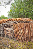 Mangroves Stock Image