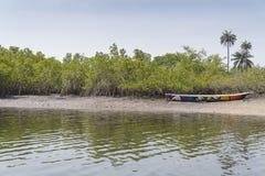 Mangroves trees Royalty Free Stock Image