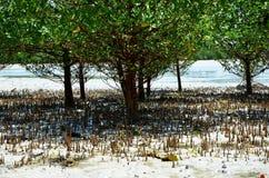Mangroves under låg tide, Zanzibar fotografering för bildbyråer