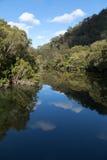 Mangroves vid floden Royaltyfri Foto