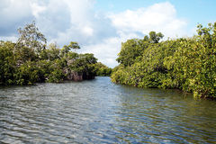 Mangroves way Stock Images