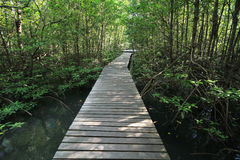 Mangroves. Wooden walkway through mangroves forest, Chantaburi , Thailand Stock Photo