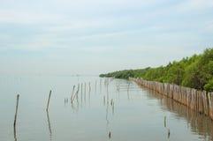 Mangroveskog Royaltyfri Fotografi