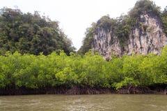 Mangroveskog Royaltyfri Foto