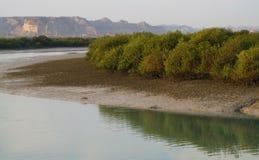 Mangroveskog arkivfoton