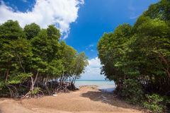Mangroveskog i Asien Royaltyfri Fotografi