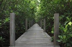 Mangroveskog i Thailand Arkivfoto