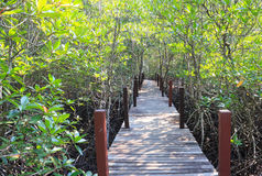 Mangroveskog med träbron royaltyfri foto