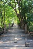 Mangroveskog med träbron royaltyfri fotografi
