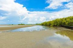 Mangroveskog på natursylten och Forest Klaeng på Prasae, arkivbilder