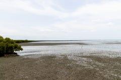 Mangroveskog som är närgränsande till havet Havsbulorna anfaller havet arkivfoton