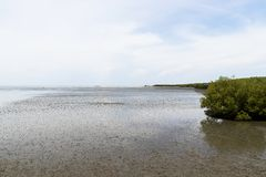 Mangroveskog som är närgränsande till havet Havsbulorna anfaller havet royaltyfria foton