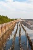 Mangroveskogar Fotografering för Bildbyråer
