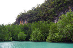 Mangroveskogar arkivbild